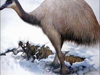 世界第一大的鸟 世界第一高鸟