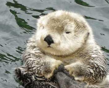 世界上都有哪些动物 世界上最可爱的动物有哪些